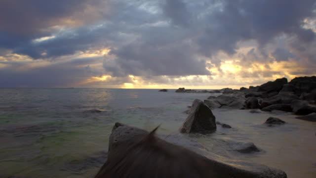 medium shot of boy exploring a shallow reef - 水泳パンツ点の映像素材/bロール