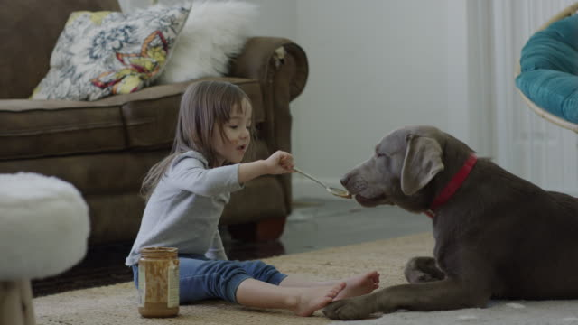 medium shot of girl feeding peanut butter to dog / provo, utah, united states - licking stock videos & royalty-free footage