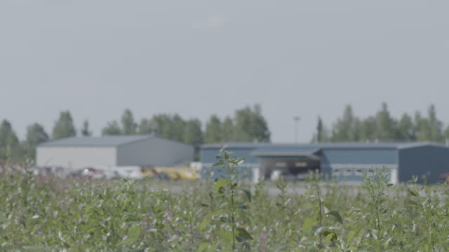 medium shot of green plants in front of a small airport - 飛行機格納庫点の映像素材/bロール