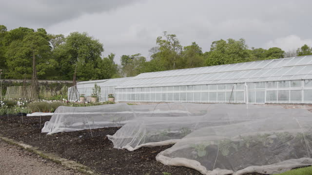 medium shot of grow tunnels and a greenhouse in the walled garden at floors castle - botany stock videos & royalty-free footage
