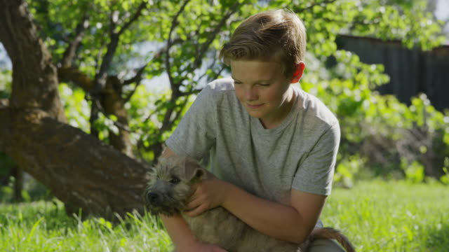 medium shot of kneeling boy playing with dog in field / springville, utah, united states - springville utah stock-videos und b-roll-filmmaterial
