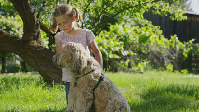 medium shot of kneeling girl petting dog in field / springville, utah, united states - springville utah stock-videos und b-roll-filmmaterial