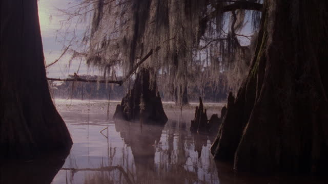 medium shot of light reflecting off of swamp water and onto spanish moss and tree trunks. - southwest usa video stock e b–roll