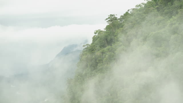 medium shot of mist from kaieteur falls moving over rainforest landscape - guyana stock videos & royalty-free footage