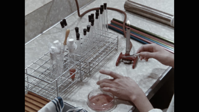 medium shot of scientist working in laboratory - shears stock videos & royalty-free footage