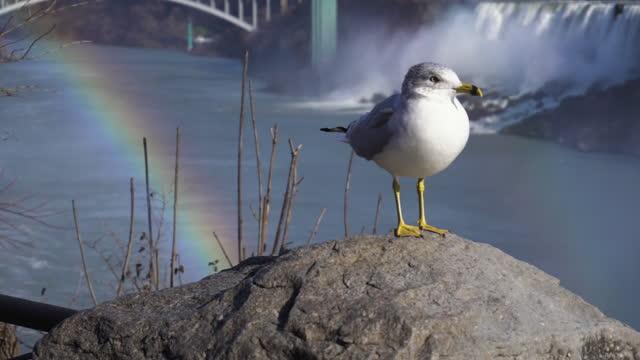 medium shot of seagull perching on stone at niagara falls - perching stock videos & royalty-free footage