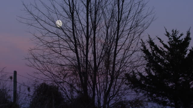 medium shot of the silhouette of a tree with the moon in the background - wisconsin stock videos & royalty-free footage
