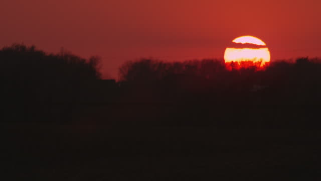 Medium shot of the sun setting in an orange sky with silhouetted trees on the horizon.