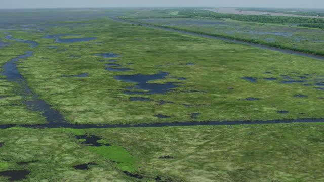 stockvideo's en b-roll-footage met medium shot of the wetland in louisiana near phoenix - moeras