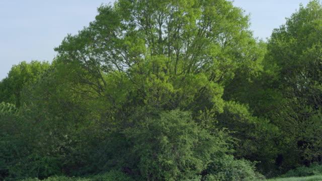 medium shot of trees growing against sky, primrose hill, london, england, united kingdom. - swaying stock videos & royalty-free footage
