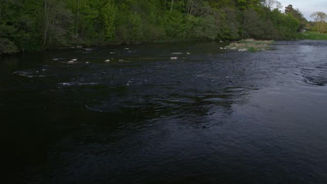 medium shot of water flowing in the river tweed - rapid stock videos & royalty-free footage
