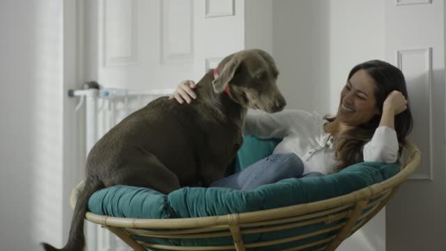 medium shot of woman petting dog in papasan / provo, utah, united states - provo stock videos & royalty-free footage