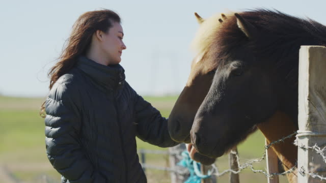 medium shot of woman petting iceland horses at fence / rangarvallasysla, iceland - only mid adult women stock videos and b-roll footage