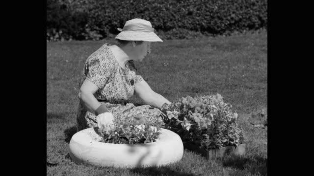 medium shot of woman planting in garden - gardening stock videos & royalty-free footage