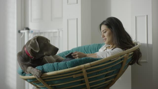 medium shot of woman sitting in papasan petting dog / provo, utah, united states - ペット点の映像素材/bロール