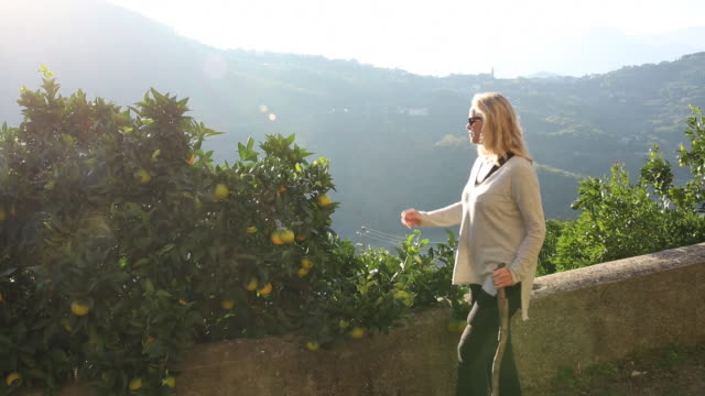 medium shot of woman walking along path beside citrus grove - wäldchen stock-videos und b-roll-filmmaterial