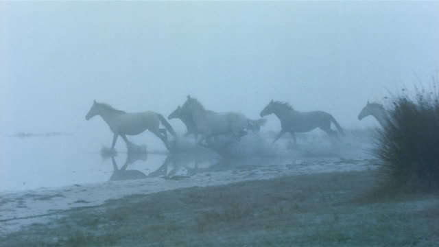 medium shot pan herd of wild horses running through shallow water in the fog / spain - fog stock videos & royalty-free footage