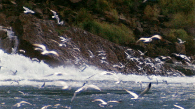 medium shot pan seagulls flying near coastline w/waterfall in background - state park stock videos & royalty-free footage