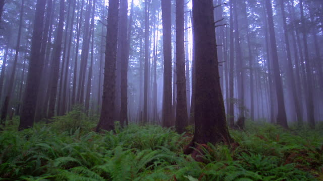 vídeos de stock, filmes e b-roll de medium shot pan trees and plants in forest with mist / olympic peninsula, washington - sparklondon