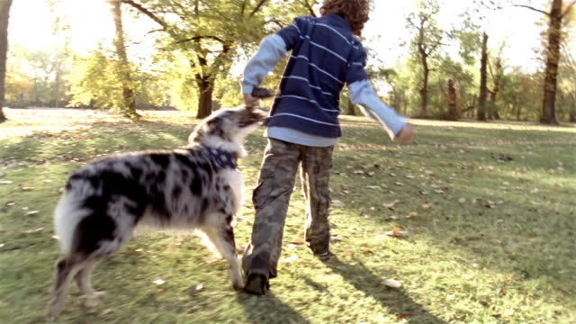 vídeos de stock e filmes b-roll de medium shot pan two boys playing with dog in park on autumn day - public park