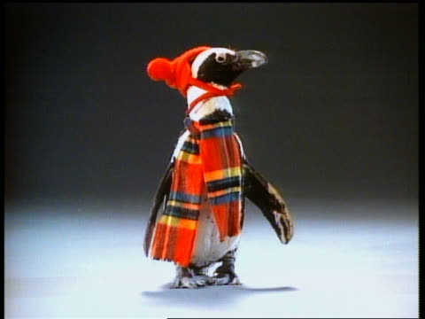 medium shot penguin wearing hat and plaid scarf / blizzard blowing over penguin - verkleidung kleidung stock-videos und b-roll-filmmaterial