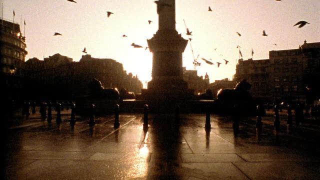 Medium shot pigeons flying through Trafalgar Square, past Nelson's Column and lion statues / London