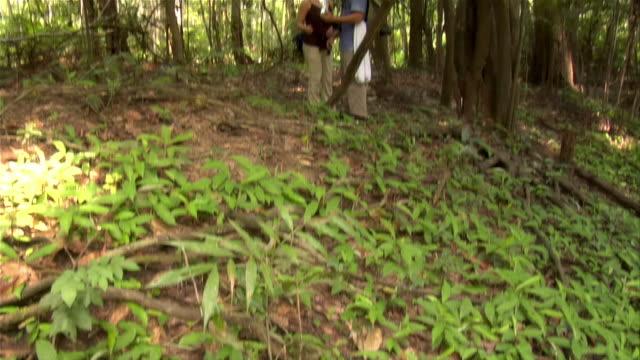 medium shot plants/ tilt up couple eating snack in rainforest/ the amazon, brazil - paar mittleren alters stock-videos und b-roll-filmmaterial
