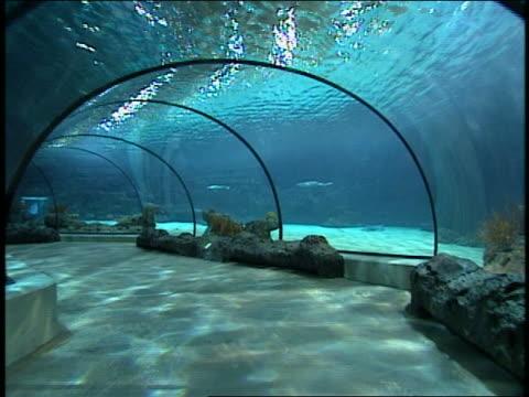 vídeos de stock e filmes b-roll de medium shot point of view walking through tunnel under water at aquarium towards fossil room in museum - cardume de peixes