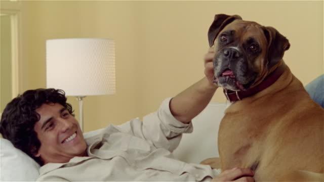 vídeos de stock, filmes e b-roll de medium shot portrait man lying on couch with boxer - bichos mimados
