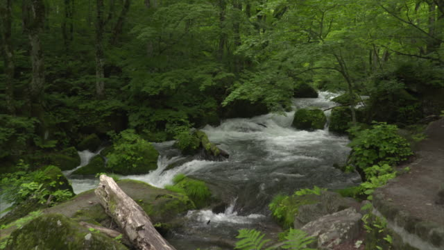 medium shot: rapidly flowing clear and cold oirase stream, aomori, japan - oirase river stock videos & royalty-free footage