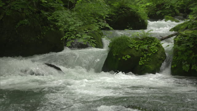 medium shot: rapidly flowing clear and cold water of the oirase stream, aomori, japan - 清らか点の映像素材/bロール