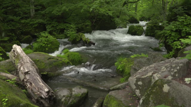 medium shot: rapidly flowing clear and cold water of the oirase stream, aomori, japan - log stock videos & royalty-free footage