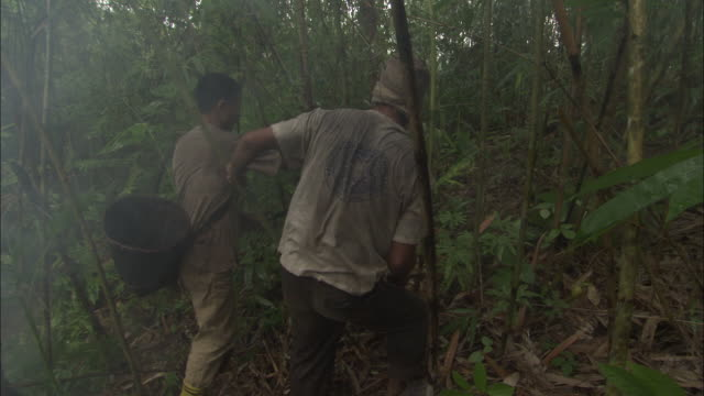 medium shot rear angle - two men hacking down bamboo plants / bangladesh  - bamboo plant stock videos and b-roll footage