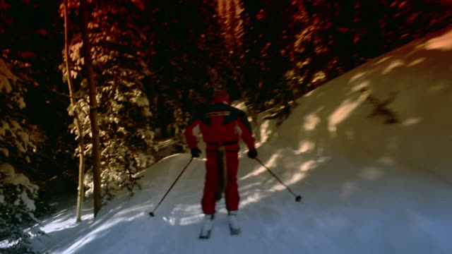 medium shot rear point of view man skiing evergreen tree lined ski path on mountain / aspen, colorado - aspen tree stock videos & royalty-free footage