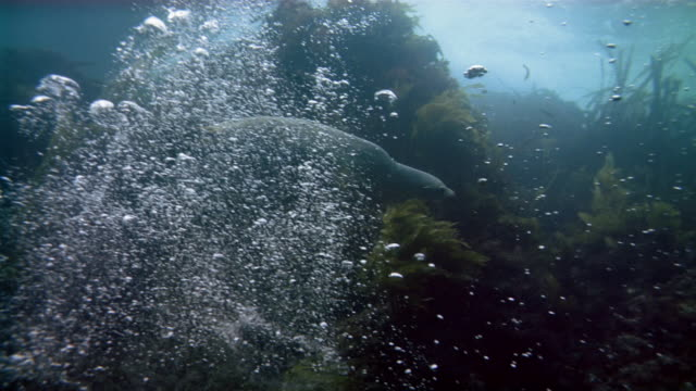 Medium shot seal swimming underwater
