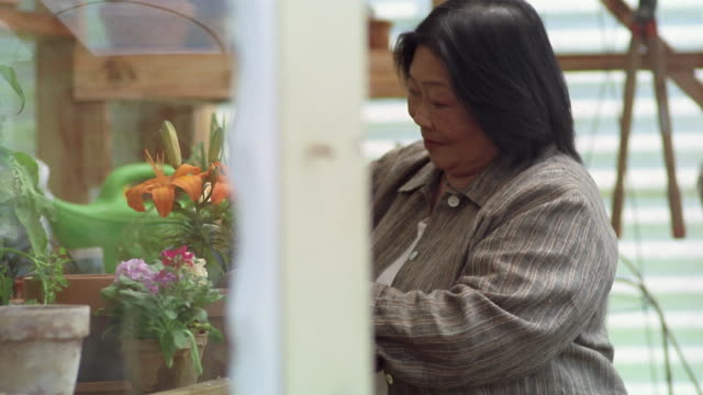 Medium shot Senior Asian woman gardening in greenhouse / Des Moines, King County, Washington, USA