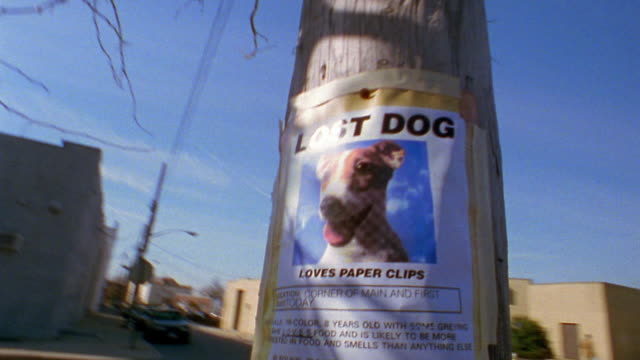 "Medium shot shaky up / down and around ""LOST DOG"" poster on street pole"