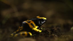 24 Frog Catching A Fly Videos And Hd Footage Getty Images