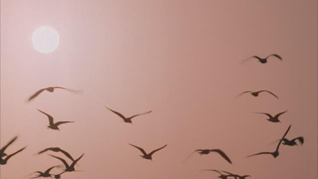medium shot, la, silhouettes of seagulls flying against sky with sun - viraggio monocromo video stock e b–roll