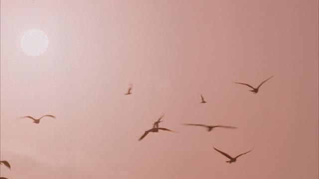 medium shot, la, pan, silhouettes of seagulls flying against sky with sun - viraggio monocromo video stock e b–roll