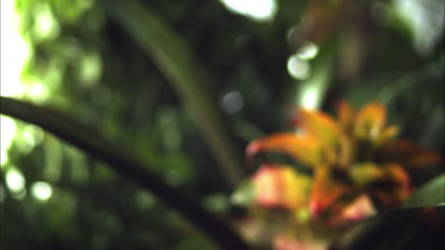 medium shot slow motion - bat falls through frame, wings flapping, blurred rain forest in background / costa rica - pipistrello video stock e b–roll