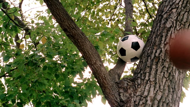 medium shot soccer ball stuck in tree / other balls and sports equipment being thrown at it - soccer glove stock videos and b-roll footage