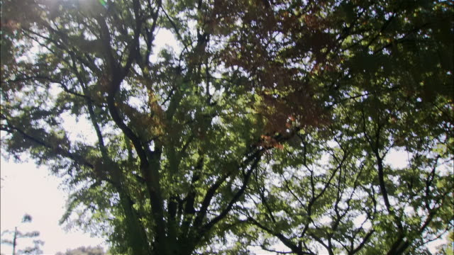 medium shot sun shining through keyaki trees in plaza in front of imperial palace/ tilt down to park benches/ tokyo - ベンチ点の映像素材/bロール