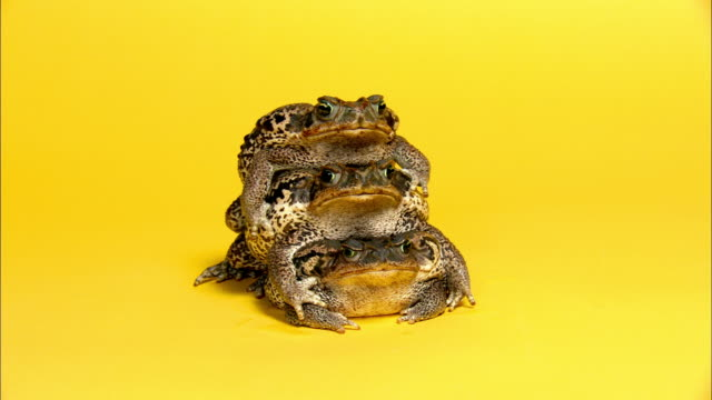 Medium shot three Rococo toads standing on top of one another