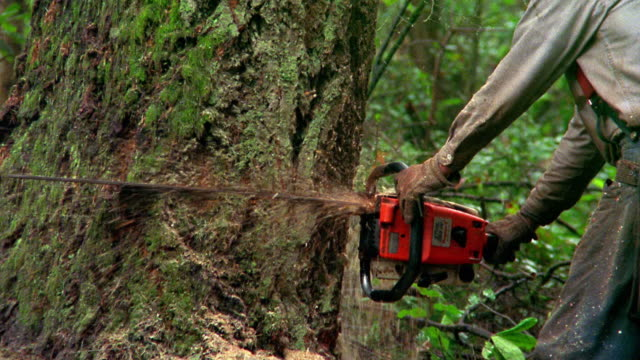 medium shot tilt down tilt up profile man cutting tree in forest with chainsaw / olympic peninsula, washington - chainsaw stock videos & royalty-free footage