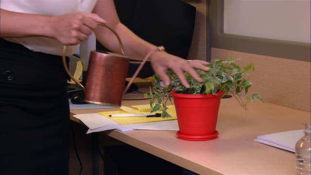 medium shot tilt up woman watering plant in cubicle - houseplant stock videos and b-roll footage