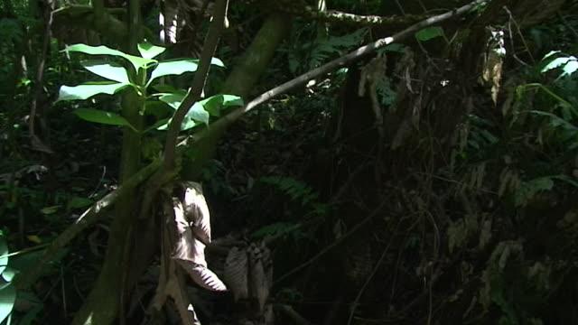 vídeos de stock, filmes e b-roll de medium shot, tracking down; vertical tracking down rainforest - árvore tropical