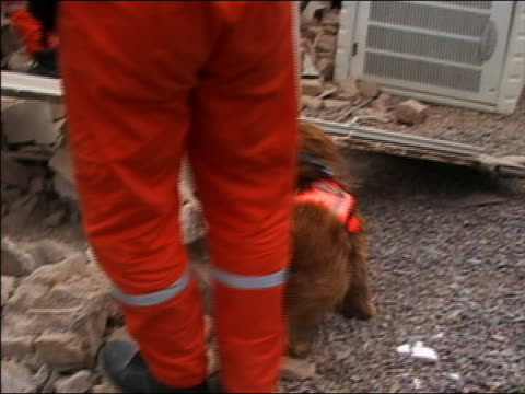 stockvideo's en b-roll-footage met medium shot tracking shot sniffer dog and handler going through rubble searching for victims of bam earthquake - 2003