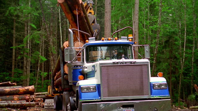 medium shot tracking shot tilt down zoom out crane loading logs on to truck in forest / olympic peninsula, washington - industria forestale video stock e b–roll