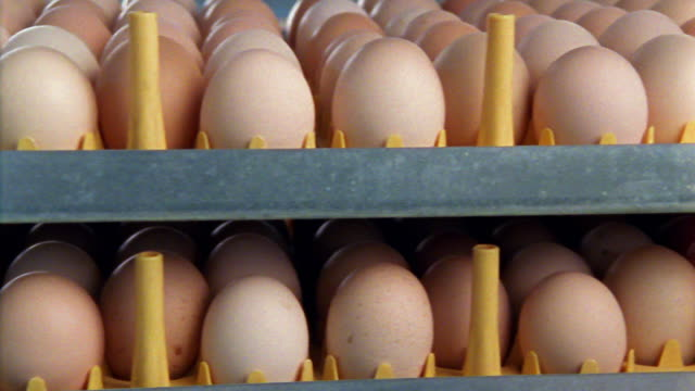 vídeos de stock, filmes e b-roll de medium shot tracking shot two rows of light brown eggs on rack - medium group of objects